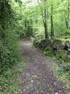 path in Cong